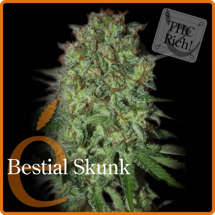 Bestial Skunk (Elite Seeds) Semilla