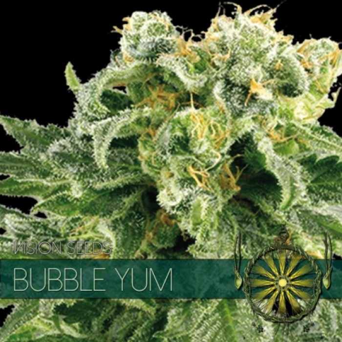Bubble Yum Vision Seeds