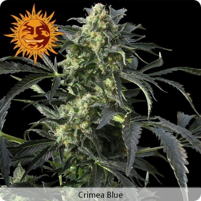 Crimea Blue (Barney´s Farm)