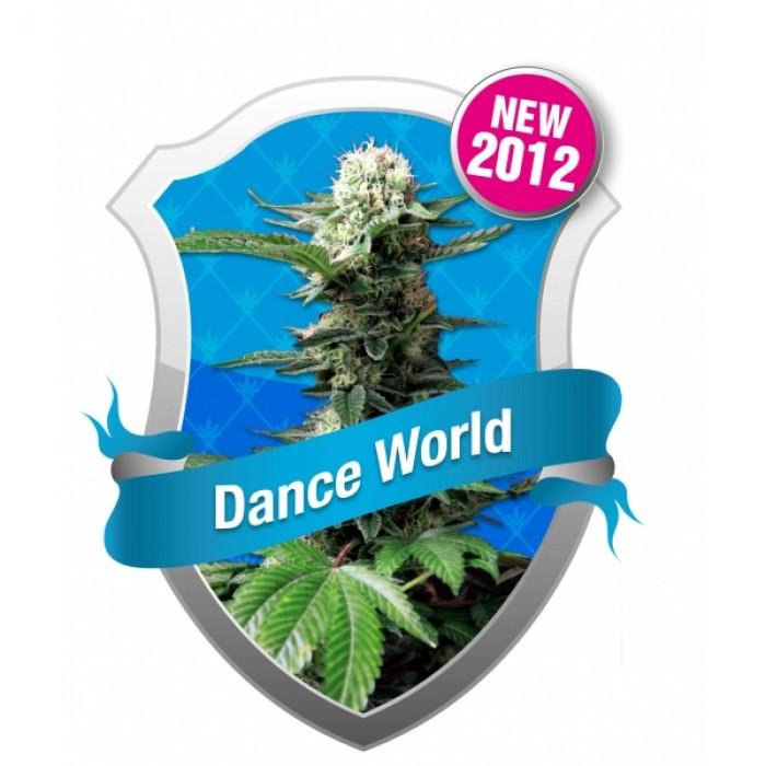 Dance World CBD Feminizada (Royal Queen)