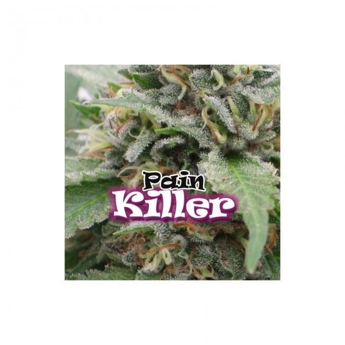 Painkiller (Dr. Underground Seeds) Semilla Feminizada Cannabis - Marihuana Painkiller (Dr. Underground Seeds) Hablamos de un híbrido creado exclusivamente para uso medicinal, si bien en las sativas buscamos efectos activos, en esta planta hemos creado lo
