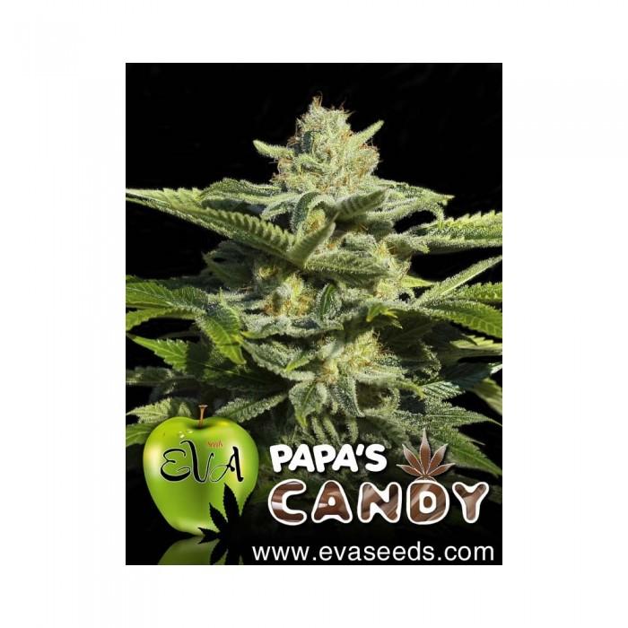 Papa´s Candy Feminizada (EVA SEEDS)