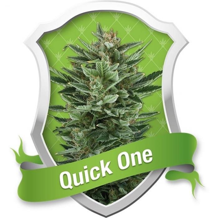 Quick One Autofloreciente