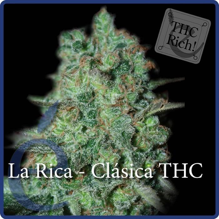 Semilla Feminizada La Rica (Elite Seeds)