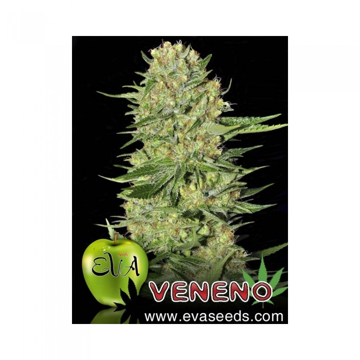 Semilla feminizada Veneno (EVa Seeds)