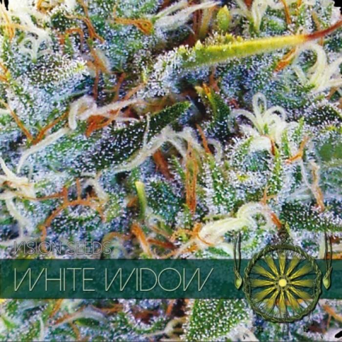 White Widow Semilla Feminizada