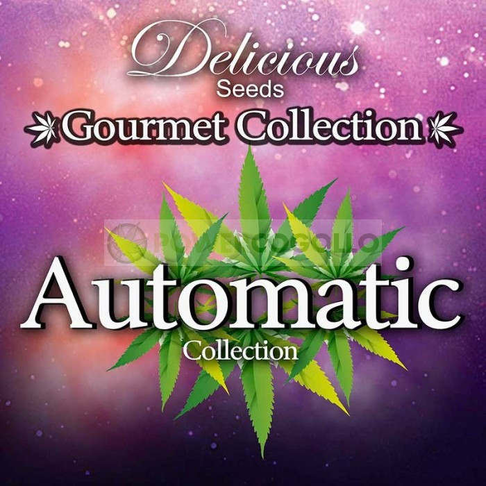 AUTOMATIC STRAINS 2# GOURMET COLLECTION (DELICIOUS SEEDS)