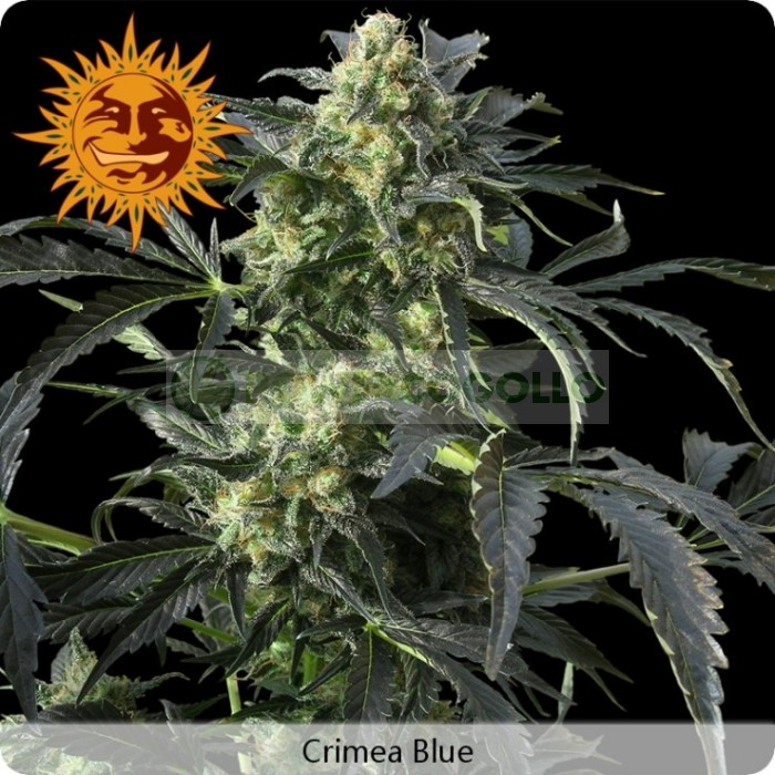 Crimea Blue (Barney´s Farm)