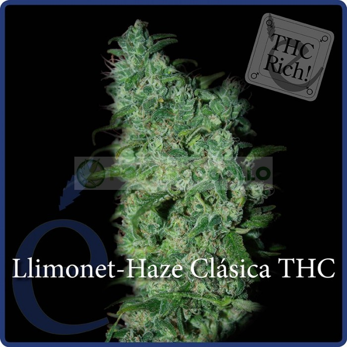 Llimonet Haze Feminizada (Elite Seeds)