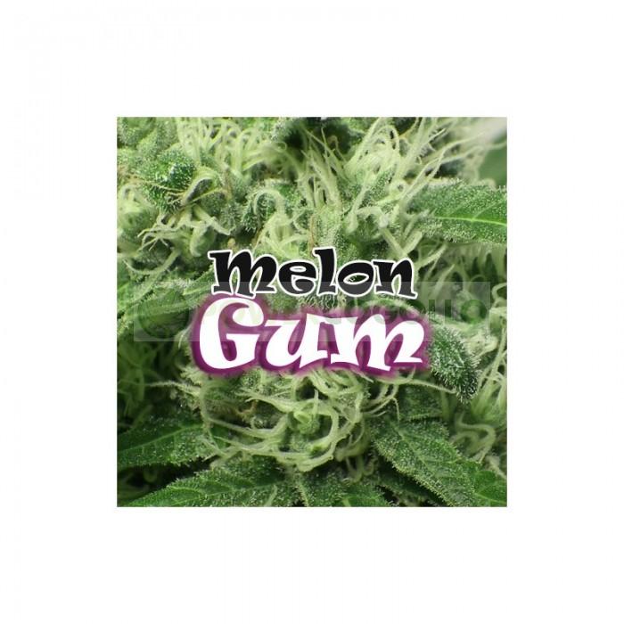 Melon Gum (Dr. Underground Seeds)