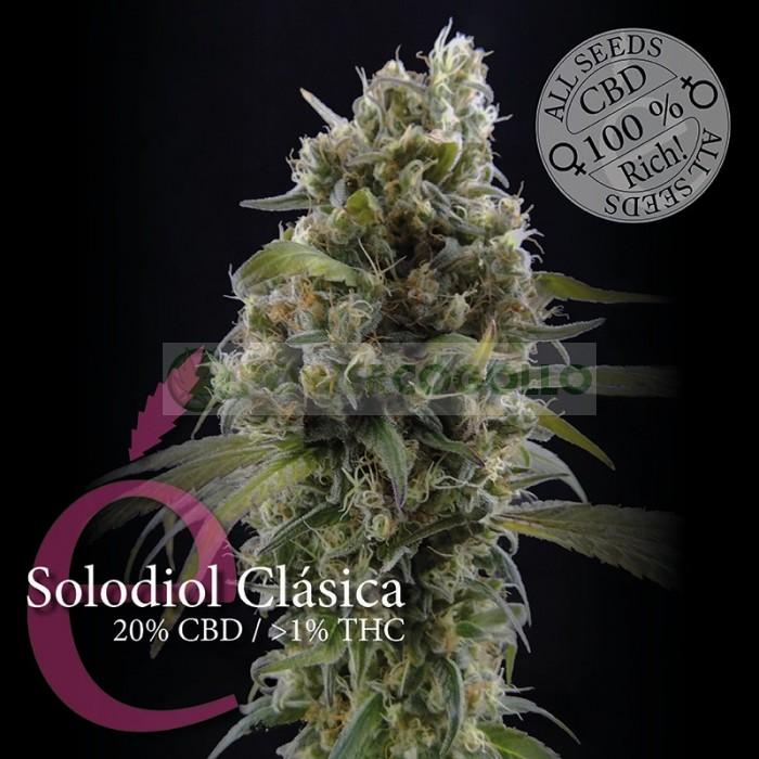 Solodiol Clásica (Elite Seeds)