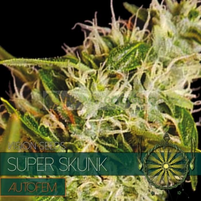 Super Skunk AutoFem (Vision Seeds) Semilla Cannabis Barata