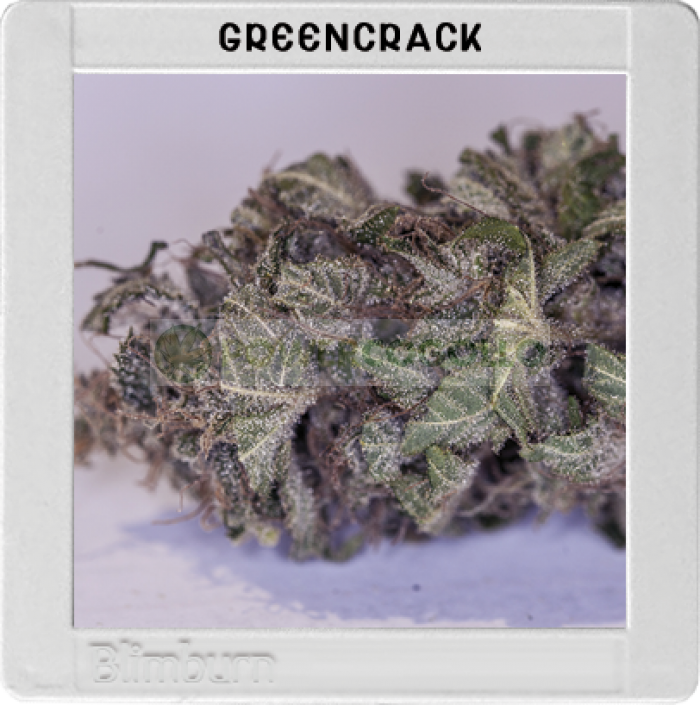 Green Crack (Original Blimburn America Feminized)