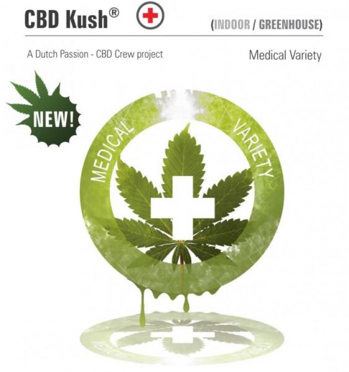 CBD Kush (Dutch Passion) Semilla Feminizada de Marihuana