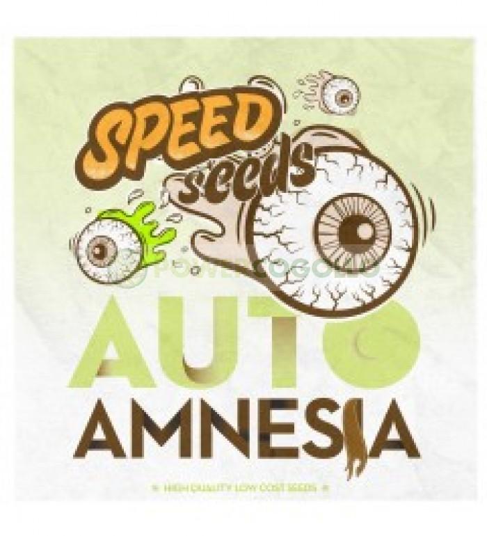 Auto Amnesia 60 unds (Speed Seeds) Semilla Feminizada Autofloreciente Cannabis,
