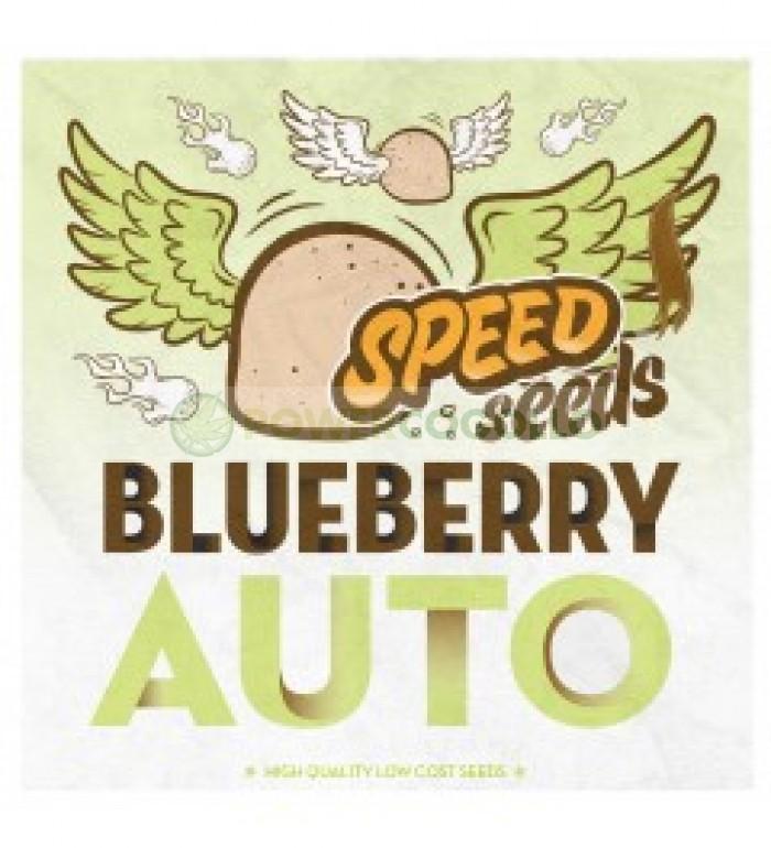Blueberry Auto Speed Seeds Semilla Feminizada Automática Granel Barata