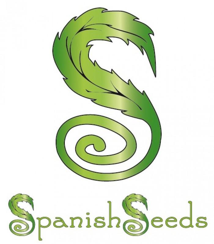 Auto Diesel x Auto Diesel (Spanish Seeds) Semilla Feminizada Cannabis Autofloreciente