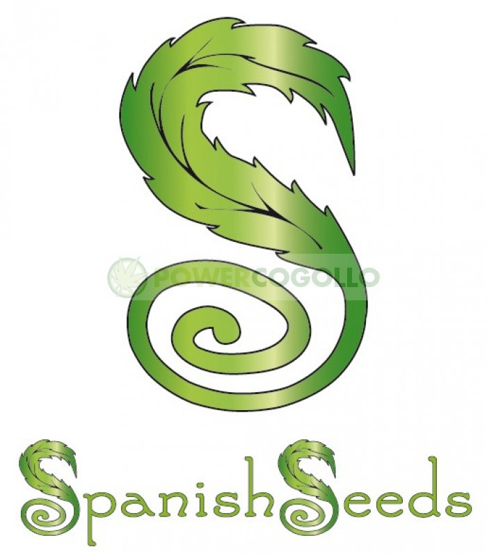 Top 44 x White Widow (Spanish Seeds)
