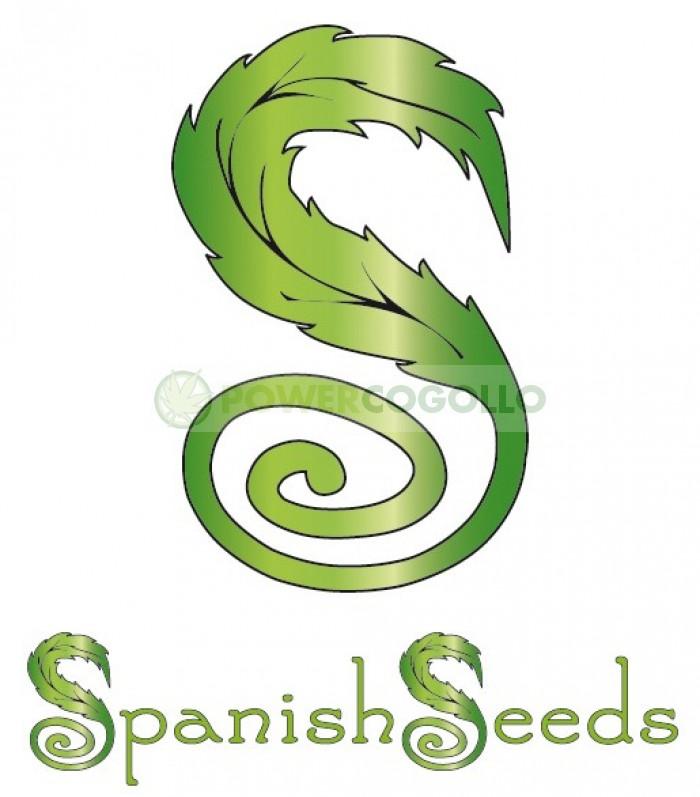 White Widow x Black Domina (Spanish Seeds)