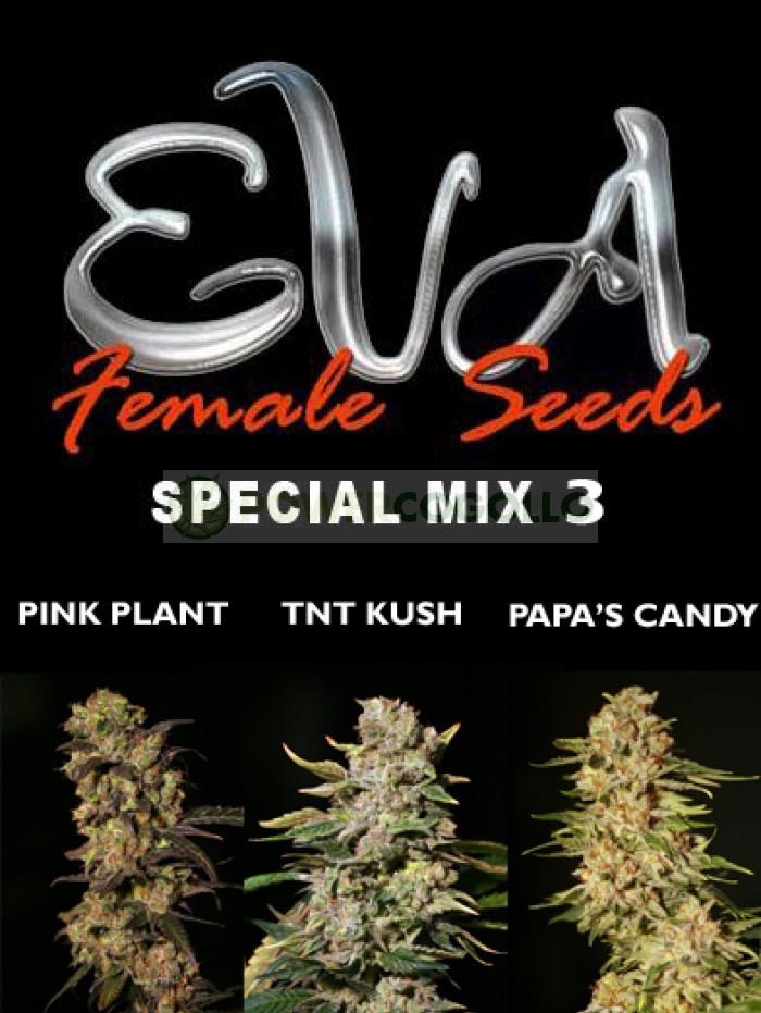 Special Mix 3 (Eva Seeds)