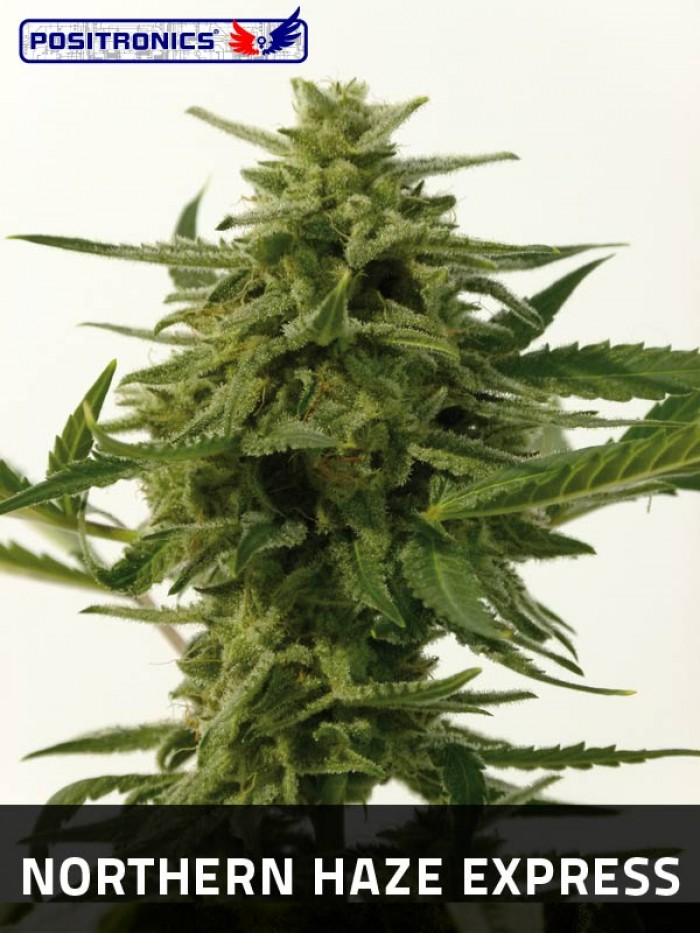 Northern Haze Express (Positronics Seeds)
