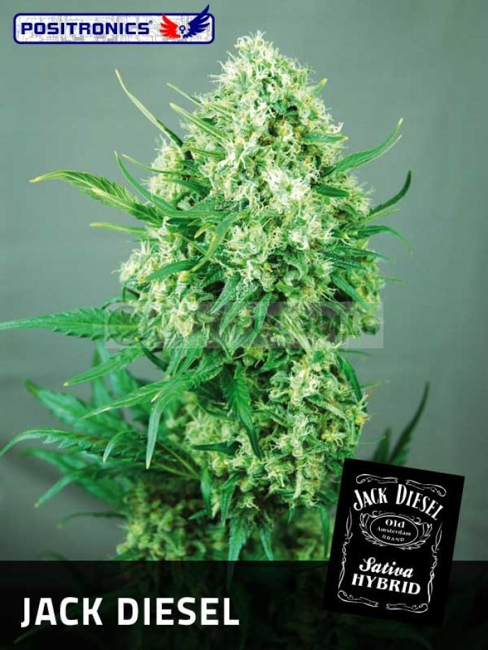 Jack Diesel (Positronics Seeds)