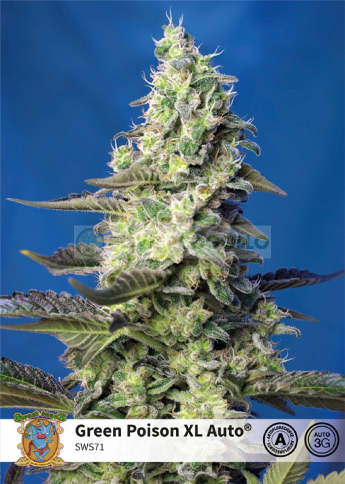 Green Poison XL Auto (Sweet Seeds)-5