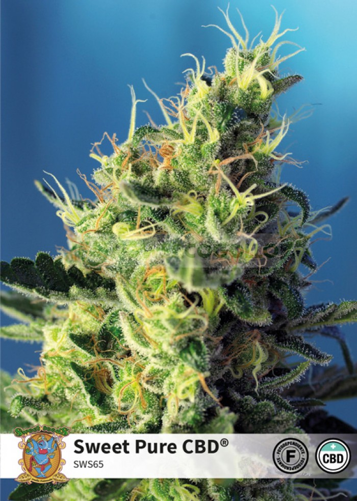 Sweet Pure CBD (Sweet Seeds)-5 (Semillas