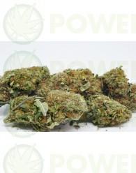 Flores CBD Orange Bud (TerpeScience)