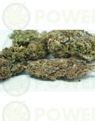 Flores CBD Orange (TerpeScience)