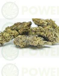 Flores CBD Purle H (TerpeScience)