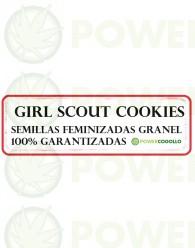 Girl Scout Cookies Semilla Feminizada 100% Granel