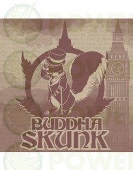 Buddha Skunk Feminizada Classics (Buddha Seeds)