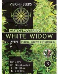 White Widow Auto Vision Seeds