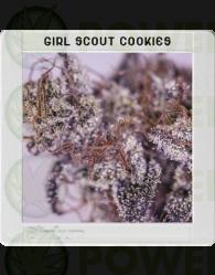 Girl Scout Cookies (Original Blimburn America Feminized) 3 Semillas