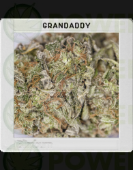 Granddaddy Purple (Original Blimburn America Feminized)