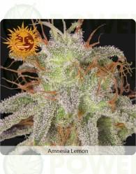 Amnesia Lemon (Barney´s Farm)