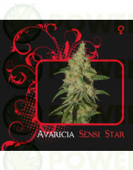 Avaricia Sensi Star (7 Pekados Seeds)