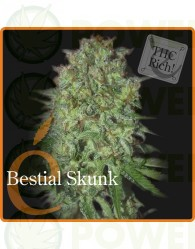 Bestial Skunk Feminizada (Elite Seeds)