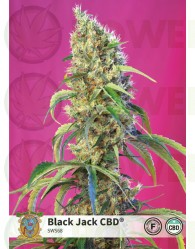 Black Jack CBD (Sweet Seeds)