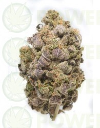 Blue Widow Feminizadas Dinafem Seeds