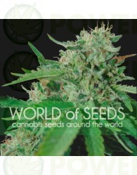 Brazil Amazonia Feminizada (World of Seeds)