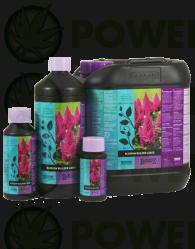 B' Cuzz Blossom Builder Liquid