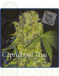 Caprichosa Thai Feminizada (Elite Seeds)
