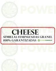 Cheese Feminizada 100% Granel