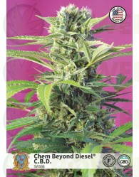 Chem Beyond Diesel CBD (Sweet Seeds)