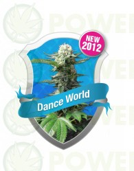 Dance World CBD Feminizada (Royal Queen)