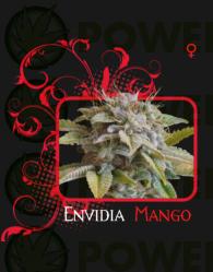 Envidia Mango