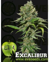 Excalibur Feminizada (Eva Seeds)