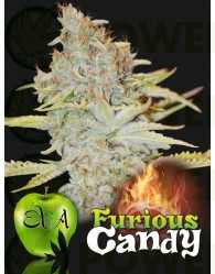 FURIOUS CANDY (EVA SEEDS)